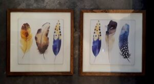 Cuadros plumas azules