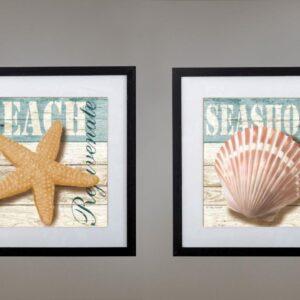 Cuadros estrella de mar - caracol