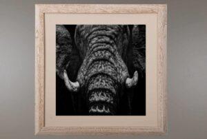 Cuadro Elefante A